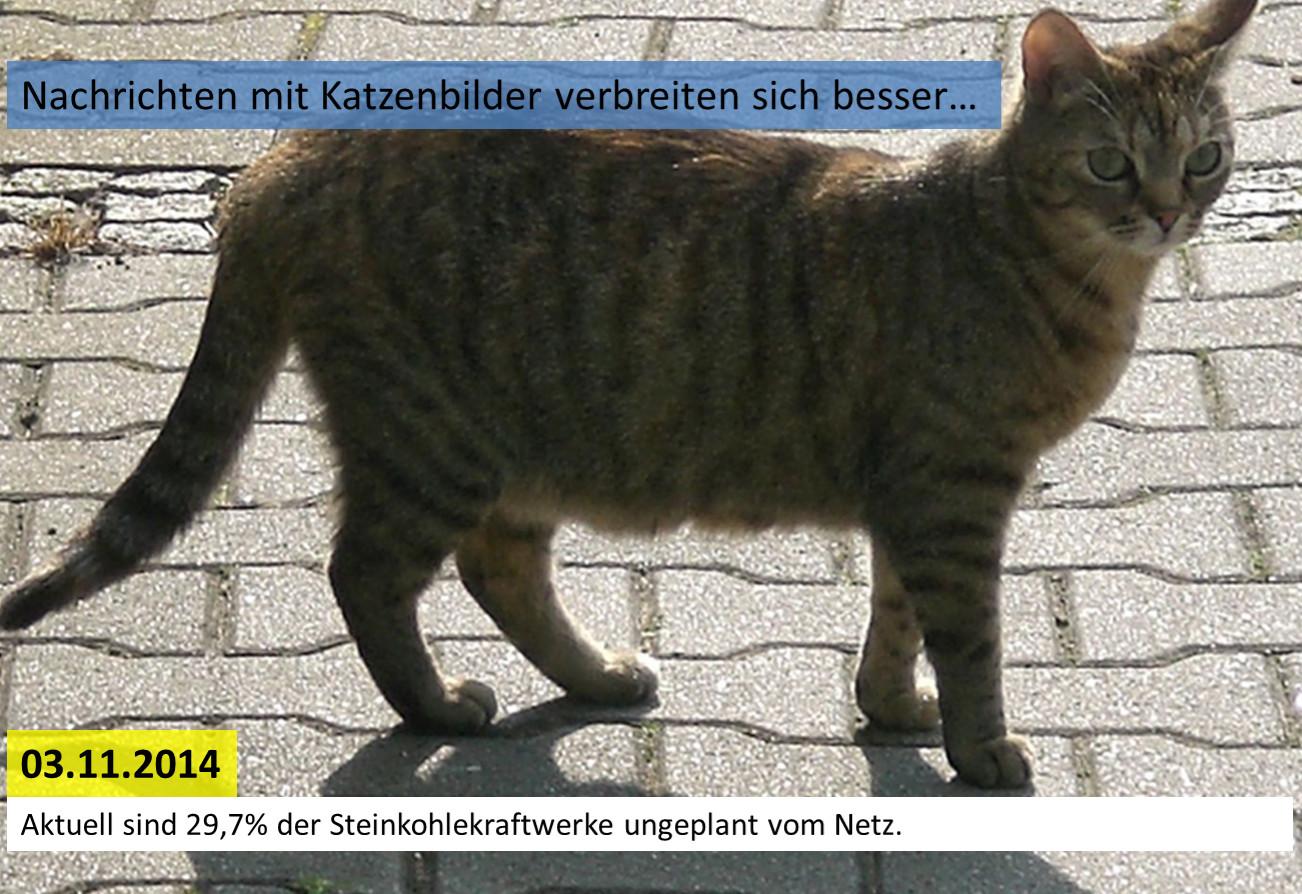 catnews_20141103