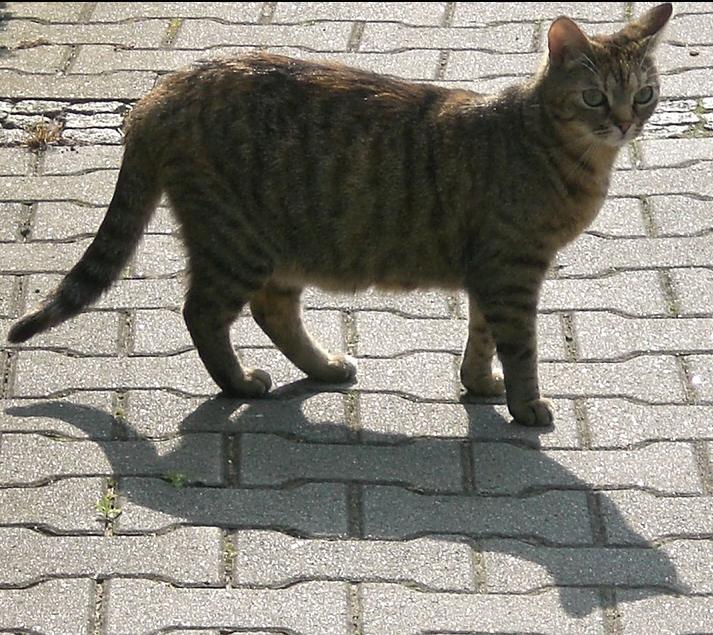 Bei der Verursachung der Engpässe beist sich die Katze in den Schwanz
