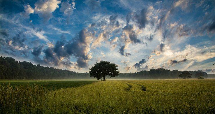 Vergleich: Ökostromanbieter mit Baumpflanzaktion 1