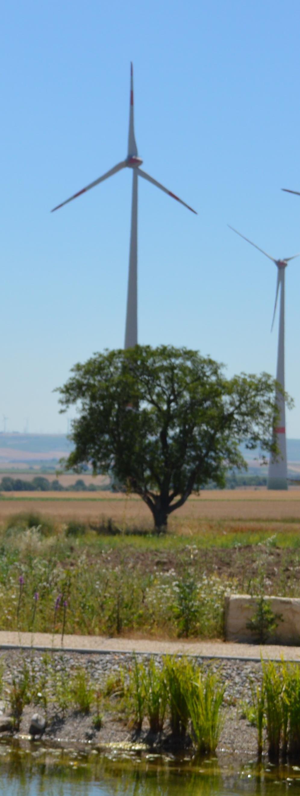 Rhein-Neckar-Zeitung im Gegenwind - Hirschberg kontra Energiewende 1